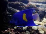 Cretaquarium (Sea Aquarium) - Crete photo 12