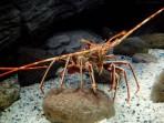 Cretaquarium (Sea Aquarium) - Crete photo 14