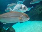 Cretaquarium (Sea Aquarium) - Crete photo 16