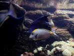 Cretaquarium (Sea Aquarium) - Crete photo 7