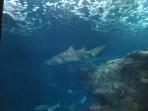Cretaquarium (Sea Aquarium) - Crete photo 5