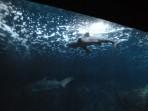 Cretaquarium (Sea Aquarium) - Crete photo 6