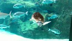 Cretaquarium (Sea Aquarium) - Crete photo 20
