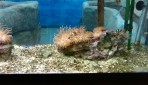 Cretaquarium (Sea Aquarium) - Crete photo 22