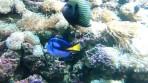 Cretaquarium (Sea Aquarium) - Crete photo 24