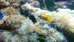 Cretaquarium (Sea Aquarium) - Crete photo 25